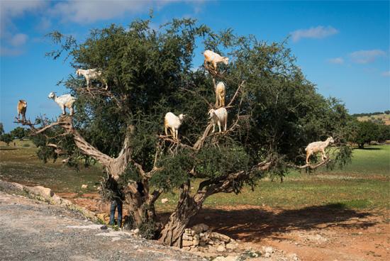 山羊と羊の違いは?鳴き声でヤギかヒツジ ...