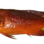 バラハタ(沖縄名:ナガジューミーバイ)は、シガテラ毒を持つ可能性のある魚のうちの一種